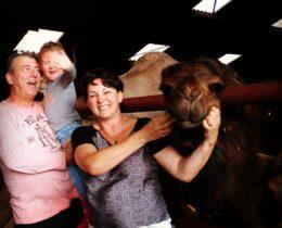 Berlicum de kamelenmelkerij bezocht. Wat zijn deze kamelen (dromedarissen) knuffelbaar, zo lief wij gingen op zondagsafari