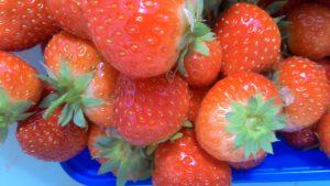 Zelf geplukte aardbeien