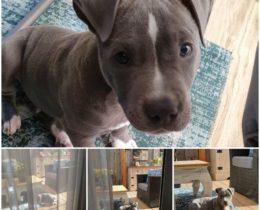 Kraamvisite bij Puppy Storm in het nieuwe huis van vrienden, hoe lief